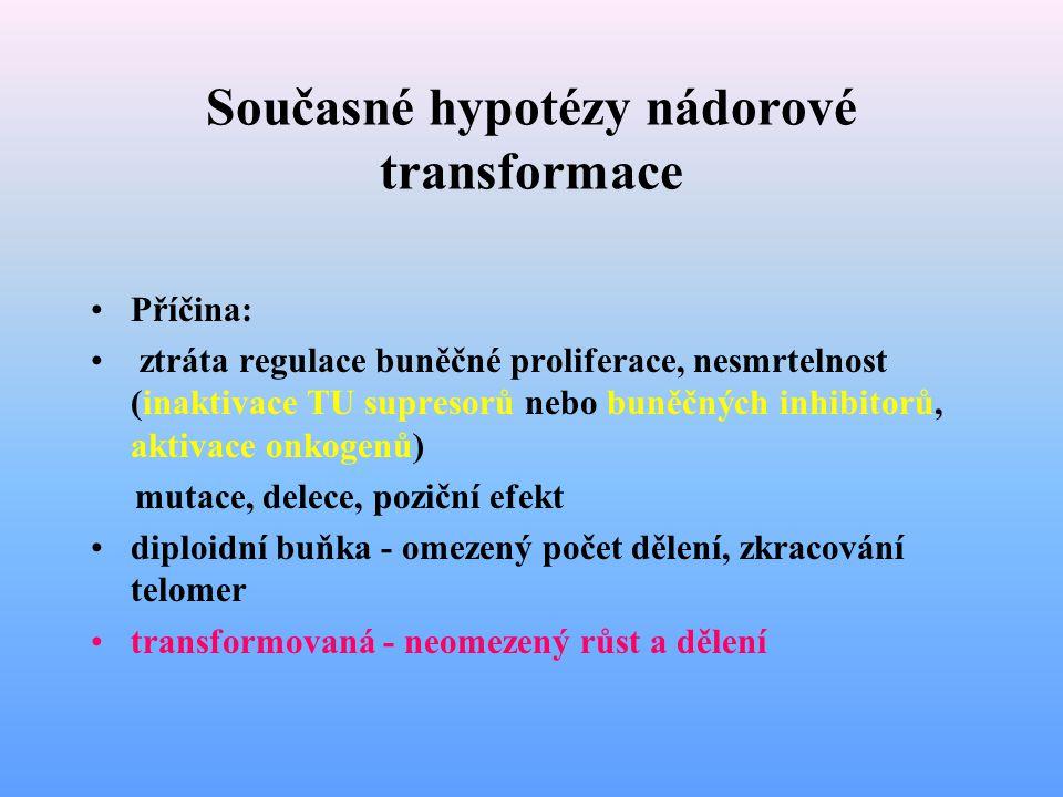 Současné hypotézy nádorové transformace Příčina: ztráta regulace buněčné proliferace, nesmrtelnost (inaktivace TU supresorů nebo buněčných inhibitorů,