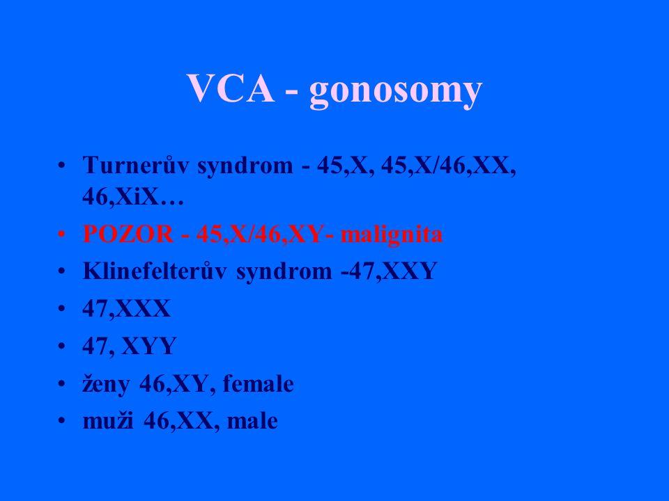VCA - gonosomy Turnerův syndrom - 45,X, 45,X/46,XX, 46,XiX… POZOR - 45,X/46,XY- malignita Klinefelterův syndrom -47,XXY 47,XXX 47, XYY ženy 46,XY, fem