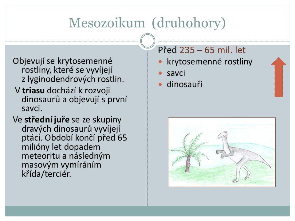 Mesozoikum (druhohory) Objevují se krytosemenné rostliny, které se vyvíjejí z lyginodendrových rostlin. V triasu dochází k rozvoji dinosaurů a objevuj