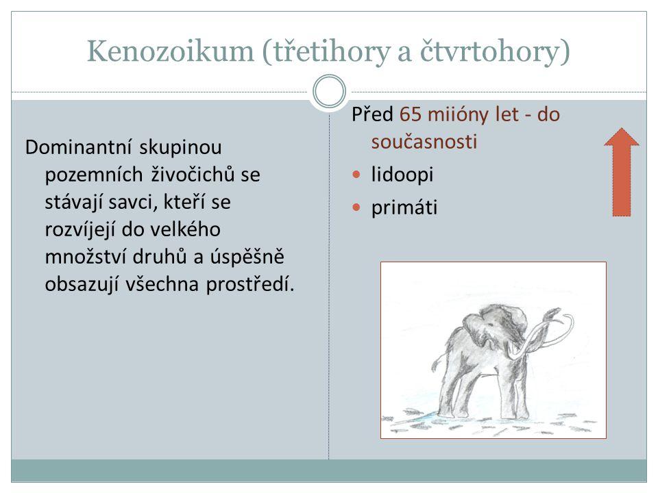 Kenozoikum (třetihory a čtvrtohory) Dominantní skupinou pozemních živočichů se stávají savci, kteří se rozvíjejí do velkého množství druhů a úspěšně o