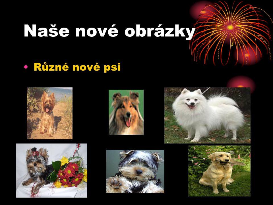 Adresy našich psů Jorkšírský teriér (Ch.st.