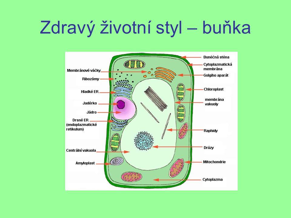 Zdravý životní styl – buňka