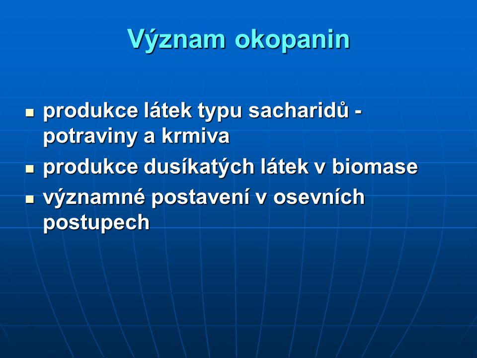 Význam okopanin produkce látek typu sacharidů - potraviny a krmiva produkce látek typu sacharidů - potraviny a krmiva produkce dusíkatých látek v biom