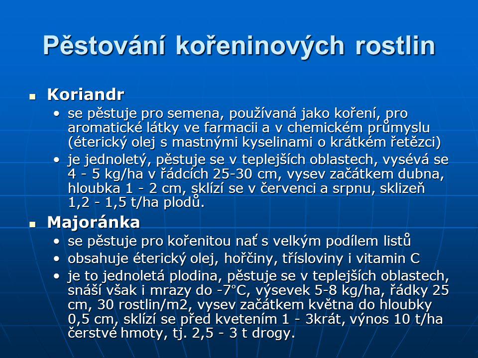Pěstování kořeninových rostlin Koriandr Koriandr se pěstuje pro semena, používaná jako koření, pro aromatické látky ve farmacii a v chemickém průmyslu