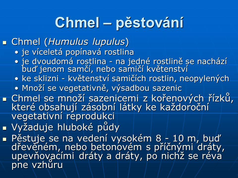 Chmel – pěstování Chmel (Humulus lupulus) Chmel (Humulus lupulus) je víceletá popínavá rostlinaje víceletá popínavá rostlina je dvoudomá rostlina - na