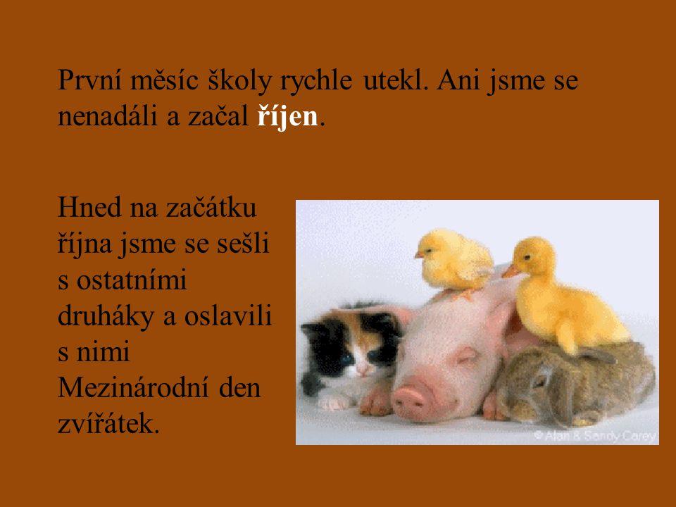V češtině poznáváme slovní druhy.