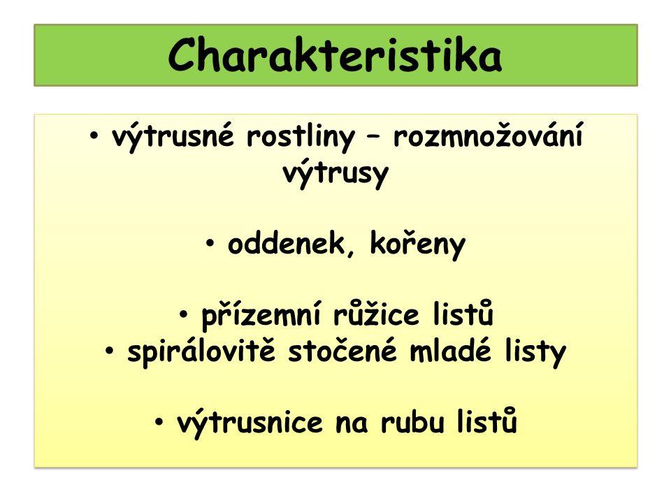 Nefrolepis obr. 12
