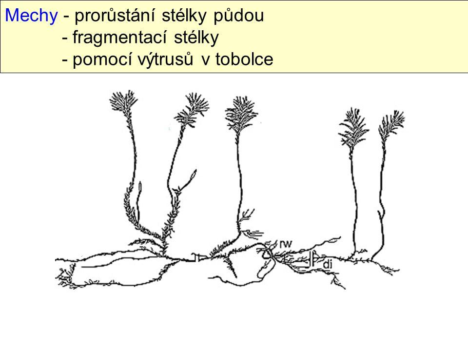 Mechy - prorůstání stélky půdou - fragmentací stélky - pomocí výtrusů v tobolce