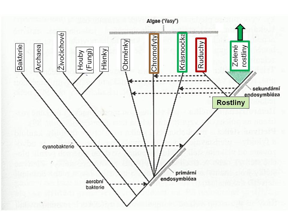 Rostliny Bakterie Archaea Živočichové Hlenky Obrněnky Chromofyty Krásnoočka Ruduchy Zelené rostliny Houby (Fungi)