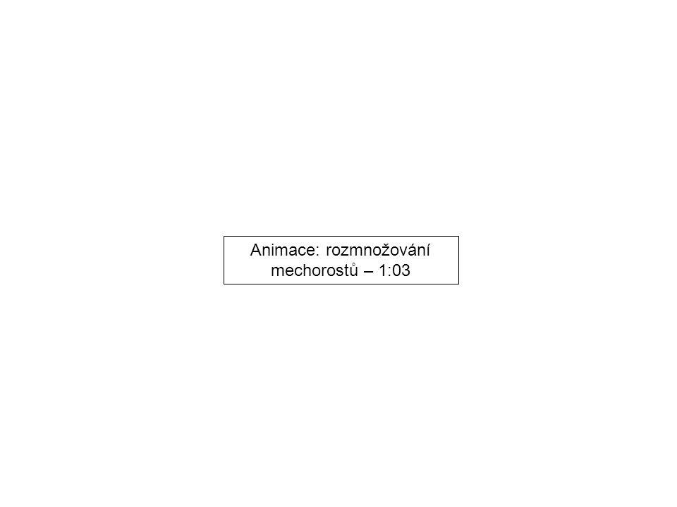 Animace: rozmnožování mechorostů – 1:03