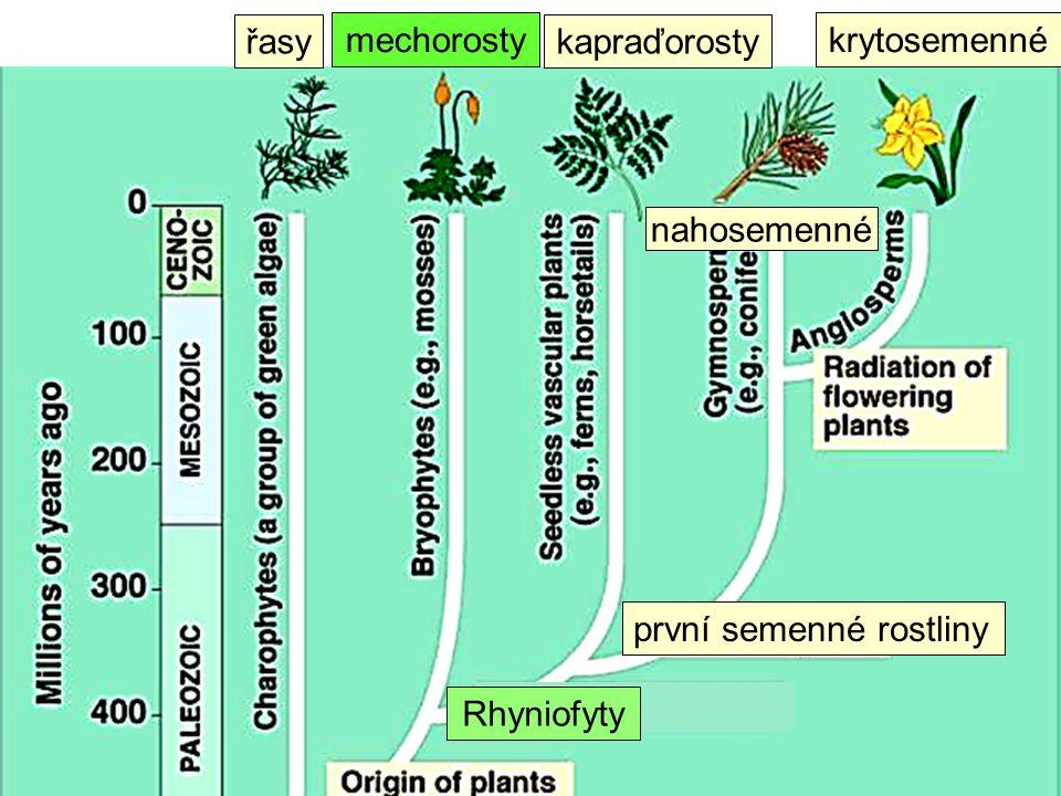 první semenné rostliny Rhyniofyty řasy mechorosty kapraďorosty nahosemenné krytosemenné