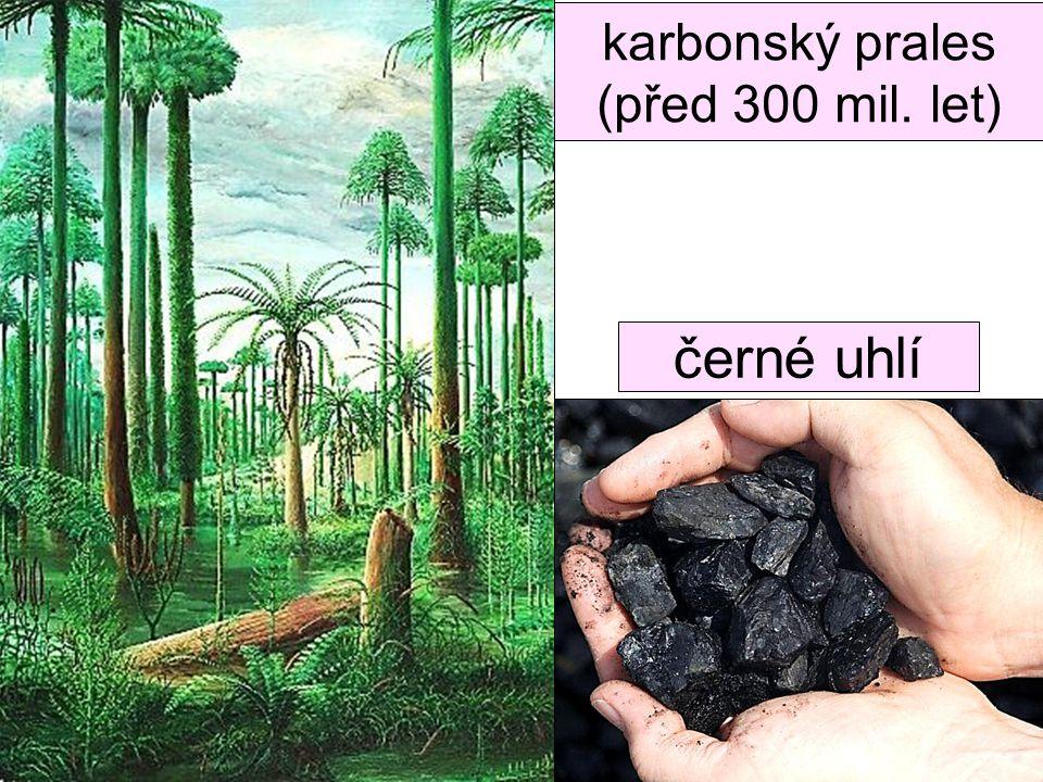 karbonský prales (před 300 mil. let) ??? černé uhlí