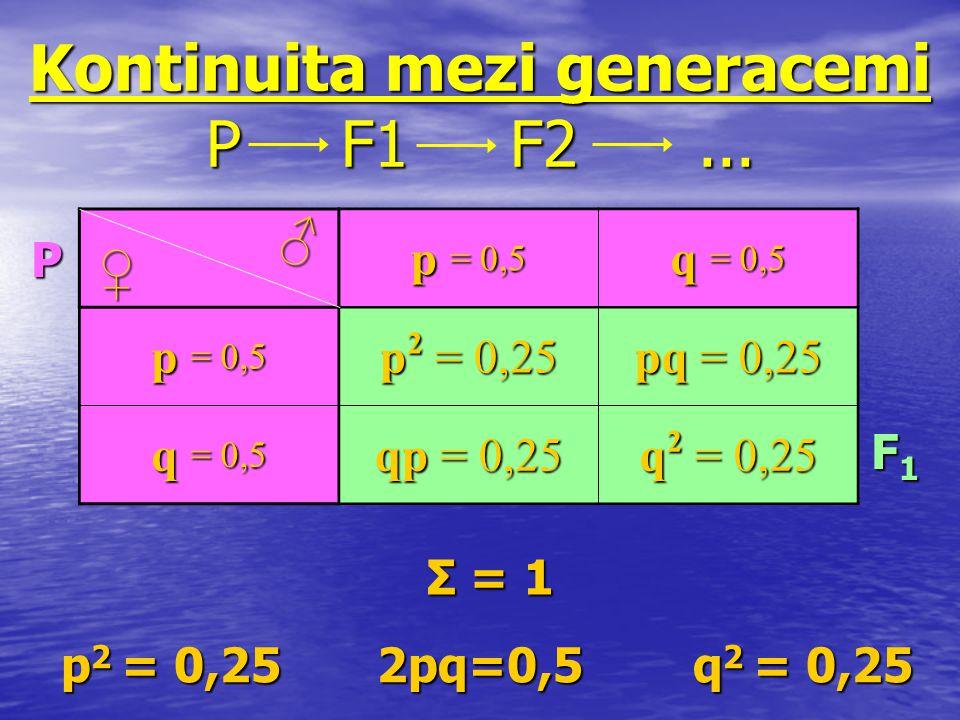 Kontinuita mezi generacemi P F1 F2... p 2 = 0,25 2pq=0,5 q 2 = 0,25 p 2 = 0,25 2pq=0,5 q 2 = 0,25 p = 0,5 q = 0,5 p = 0,5 p 2 = 0,25 pq = 0,25 q = 0,5