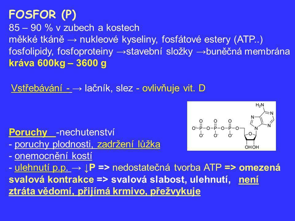 HOŘČÍK (Magnesium, Mg) 62 % v kostech, 37 % v buňkách, Resorpce →tenké střevo Funkce - aktivuje asi 250 enzymů - ATP → ADP + energie pro svalový stah - tvorba a odbourávání acetylcholinu → vzruch → synapse nervosvalové ploténka ↓ obsah Mg - ↑ uvolňování acetylcholinu ↑dráždivost ↑ obsah Mg - ↓uvolňování, útlum ↔Mg narkóza K nedostatku Mg dochází: 1.
