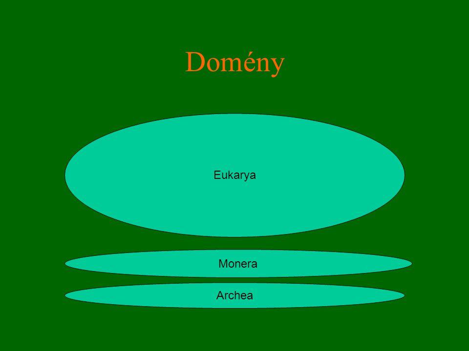 Domény Archea Monera Eukarya