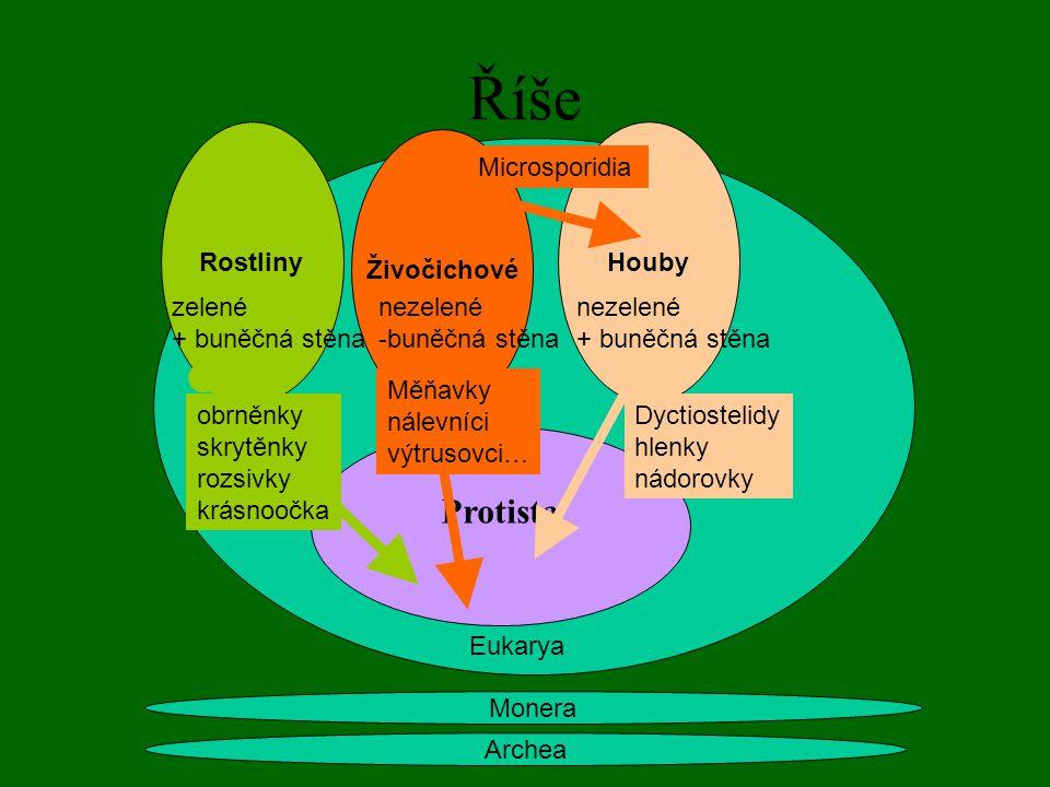 Říše Archea Monera Rostliny Živočichové Houby zelené + buněčná stěna nezelené -buněčná stěna nezelené + buněčná stěna Eukarya Protista obrněnky skrytěnky rozsivky krásnoočka Dyctiostelidy hlenky nádorovky Měňavky nálevníci výtrusovci… Microsporidia