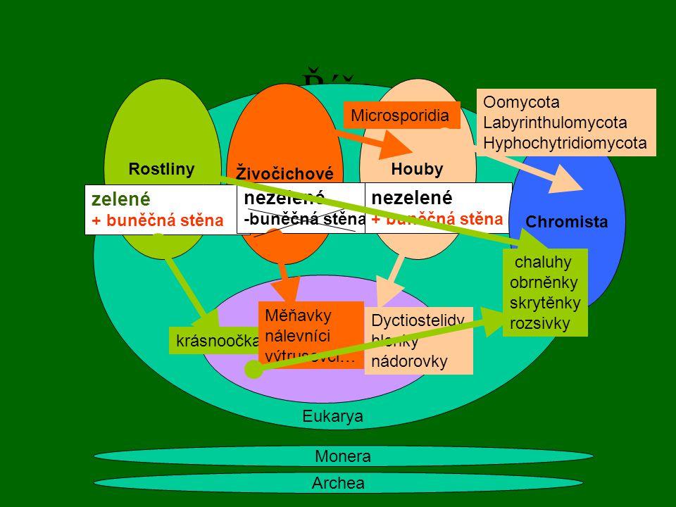 Říše Archea Monera Rostliny Živočichové Houby zelené + buněčná stěna nezelené -buněčná stěna nezelené + buněčná stěna Eukarya krásnoočka Dyctiostelidy