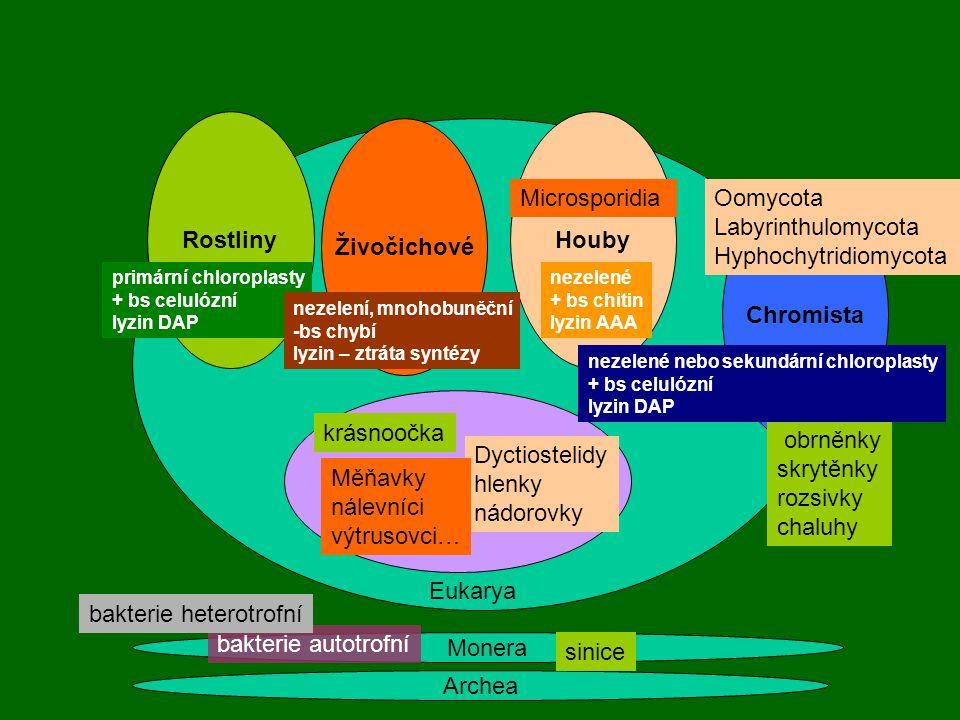Archea Monera Rostliny Živočichové Houby primární chloroplasty + bs celulózní lyzin DAP nezelení, mnohobuněční -bs chybí lyzin – ztráta syntézy nezele