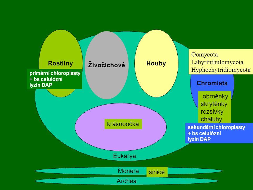 Archea Monera Rostliny Živočichové Houby primární chloroplasty + bs celulózní lyzin DAP Eukarya krásnoočka Chromista obrněnky skrytěnky rozsivky chalu