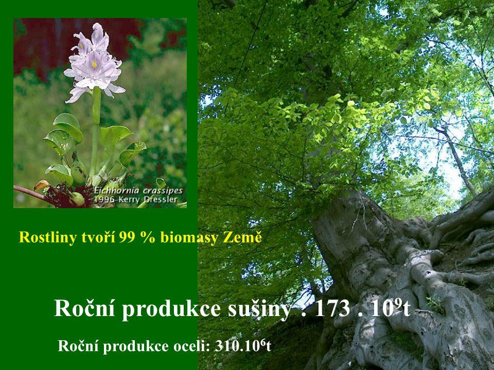 Rostliny tvoří 99 % biomasy Země Roční produkce sušiny : 173.