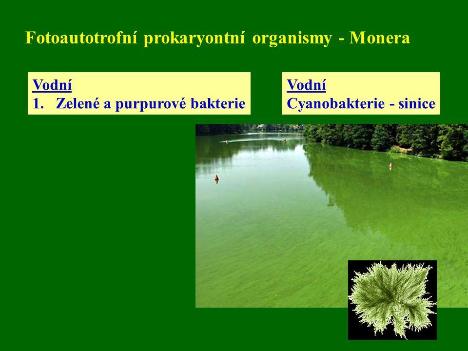 Fotoautotrofní prokaryontní organismy - Monera Vodní 1.Zelené a purpurové bakterie Vodní Cyanobakterie - sinice