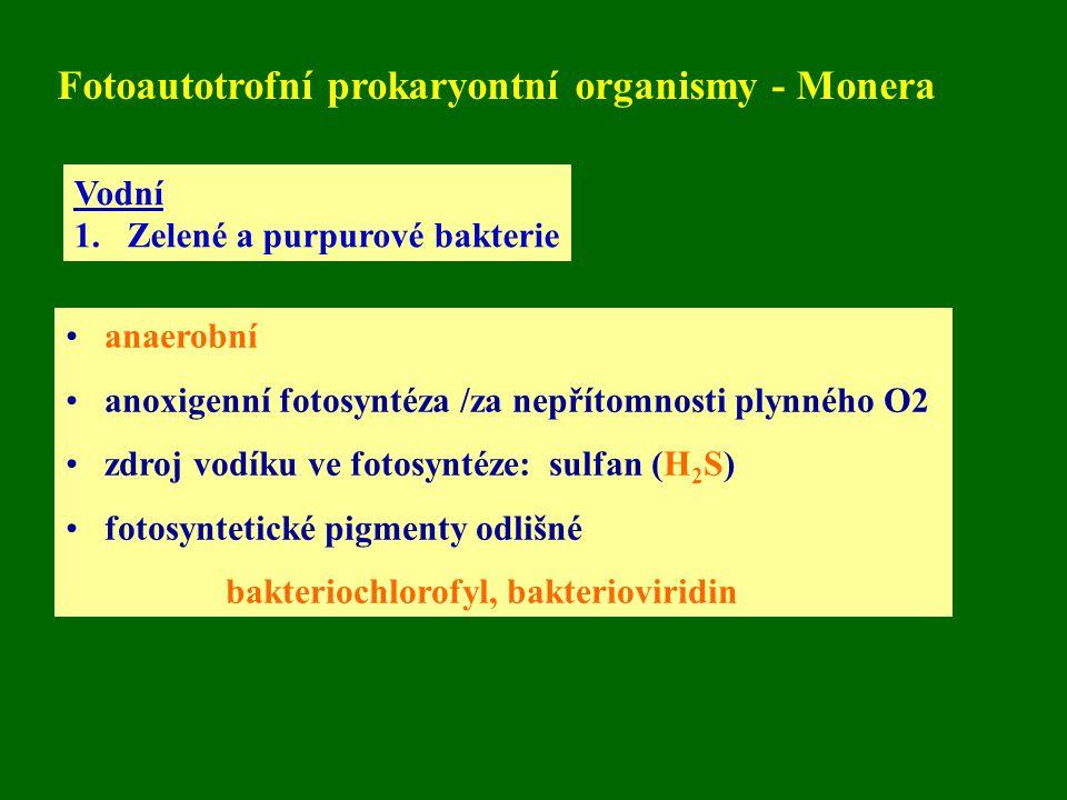 Fotoautotrofní prokaryontní organismy - Monera Vodní 1.Zelené a purpurové bakterie anaerobní anoxigenní fotosyntéza /za nepřítomnosti plynného O2 zdroj vodíku ve fotosyntéze: sulfan (H 2 S) fotosyntetické pigmenty odlišné bakteriochlorofyl, bakterioviridin