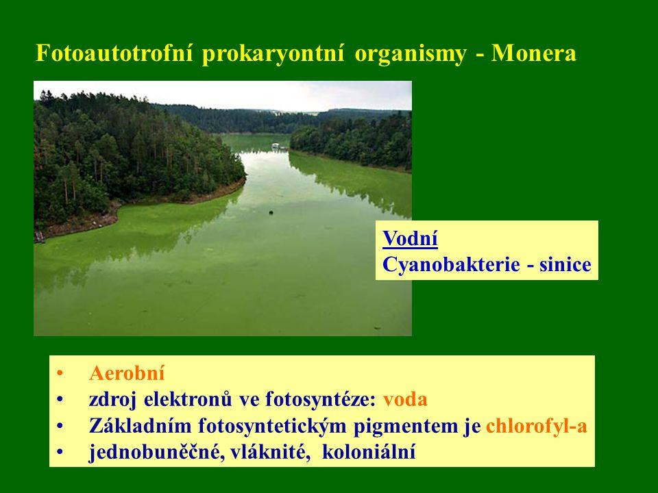 Fotoautotrofní prokaryontní organismy - Monera Aerobní zdroj elektronů ve fotosyntéze: voda Základním fotosyntetickým pigmentem je chlorofyl-a jednobuněčné, vláknité, koloniální Vodní Cyanobakterie - sinice