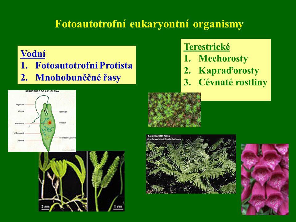 Fotoautotrofní eukaryontní organismy Vodní 1.Fotoautotrofní Protista 2.Mnohobuněčné řasy Terestrické 1.Mechorosty 2.Kapraďorosty 3.Cévnaté rostliny