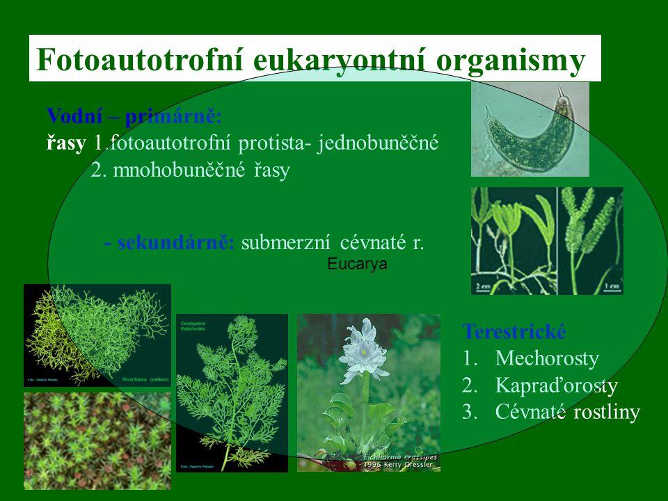 Fotoautotrofní eukaryontní organismy Vodní – primárně: řasy 1.fotoautotrofní protista- jednobuněčné 2. mnohobuněčné řasy Terestrické 1.Mechorosty 2.Ka