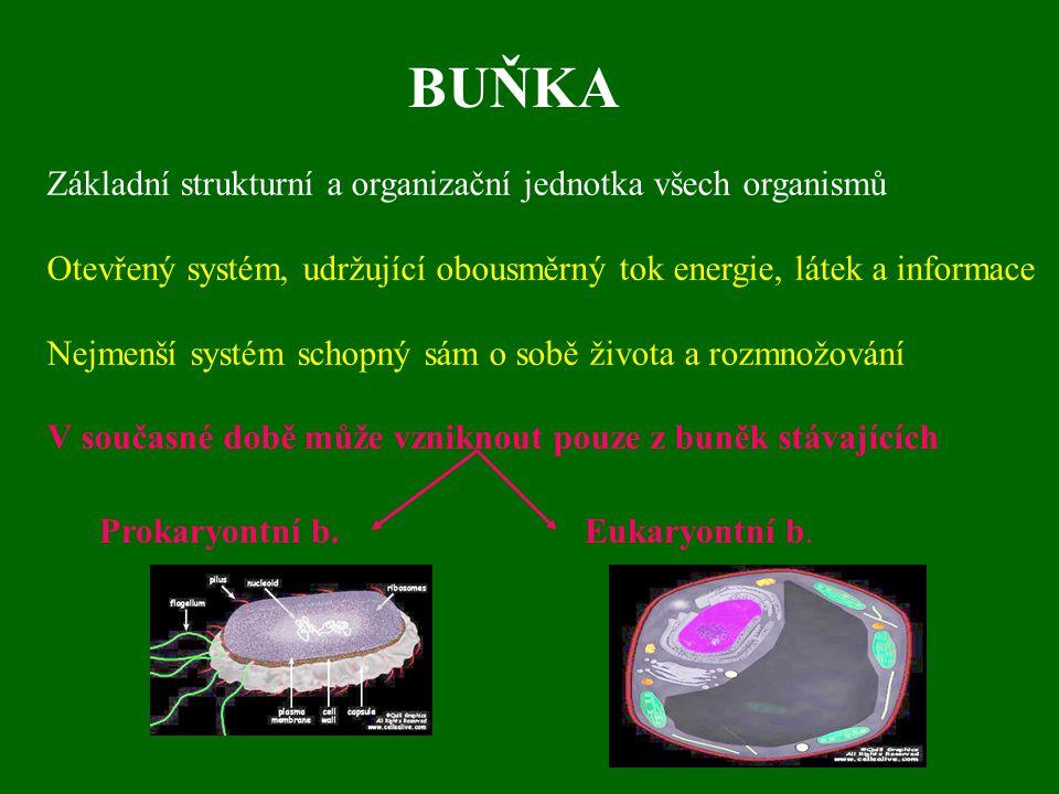 BUŇKA Základní strukturní a organizační jednotka všech organismů Otevřený systém, udržující obousměrný tok energie, látek a informace Nejmenší systém schopný sám o sobě života a rozmnožování V současné době může vzniknout pouze z buněk stávajících Prokaryontní b.Eukaryontní b.