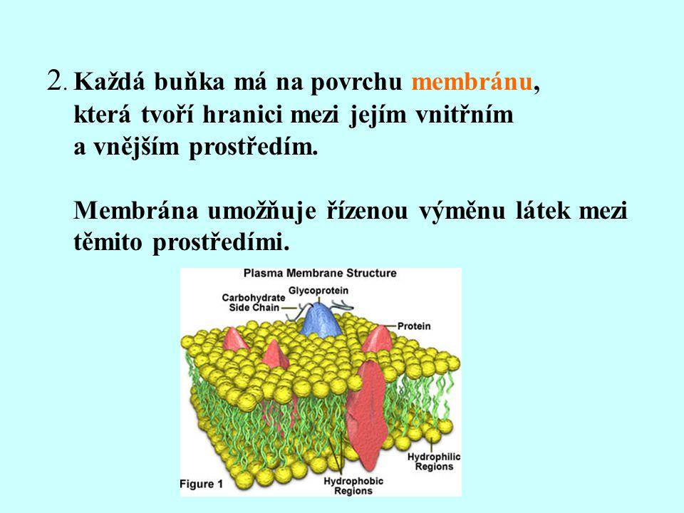2. Každá buňka má na povrchu membránu, která tvoří hranici mezi jejím vnitřním a vnějším prostředím. Membrána umožňuje řízenou výměnu látek mezi těmit