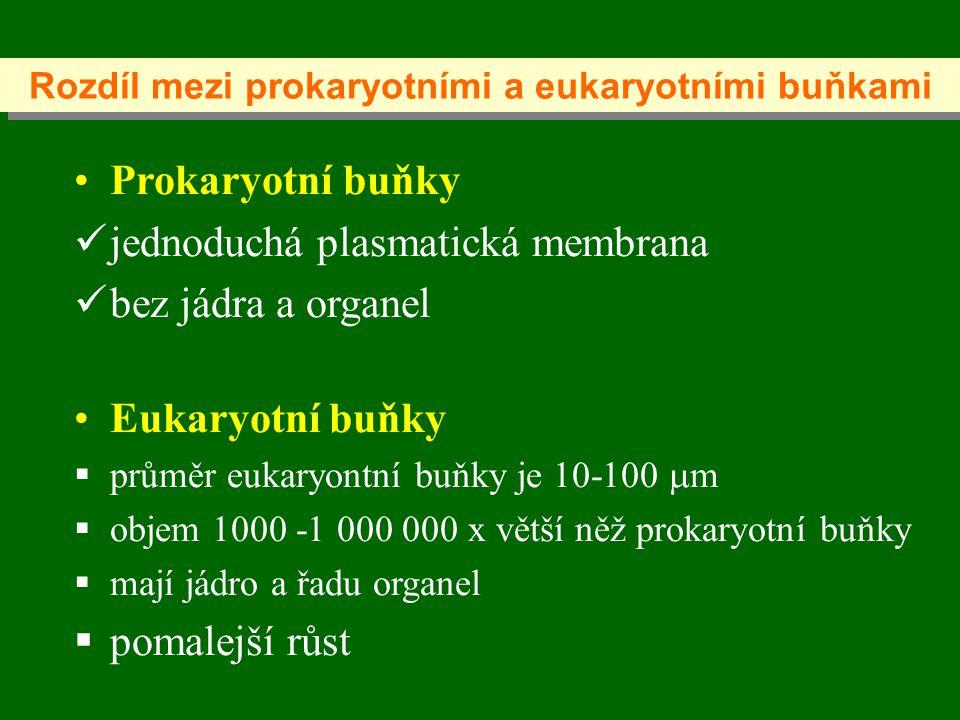 Prokaryotní buňky jednoduchá plasmatická membrana bez jádra a organel Eukaryotní buňky  průměr eukaryontní buňky je 10-100  m  objem 1000 -1 000 000 x větší něž prokaryotní buňky  mají jádro a řadu organel  pomalejší růst Rozdíl mezi prokaryotními a eukaryotními buňkami