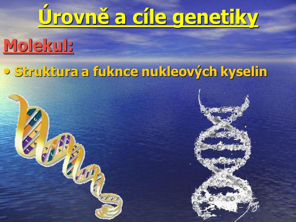 Úrovně a cíle genetiky Struktura a fuknce nukleových kyselin Struktura a fuknce nukleových kyselin Molekul: