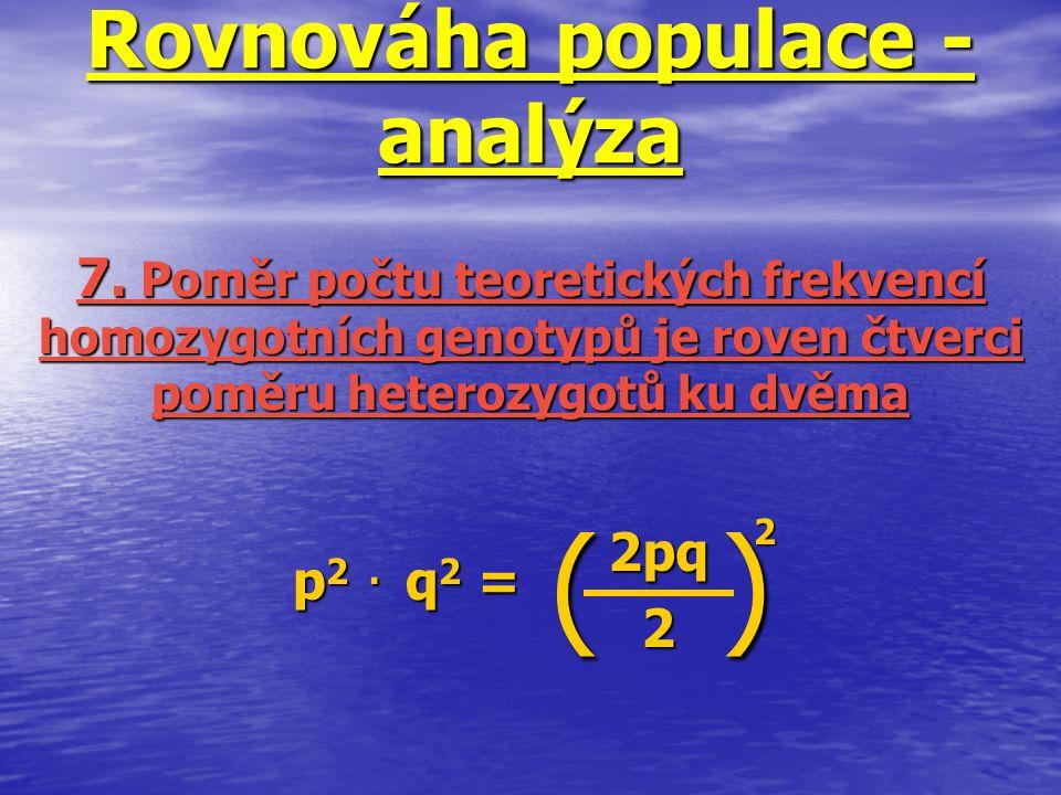 Rovnováha populace - analýza p 2. q 2 = 7. Poměr počtu teoretických frekvencí homozygotních genotypů je roven čtverci poměru heterozygotů ku dvěma 2pq