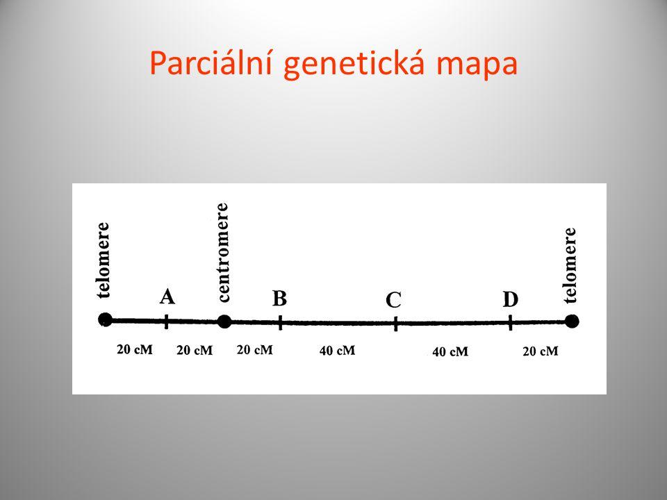 Parciální genetická mapa
