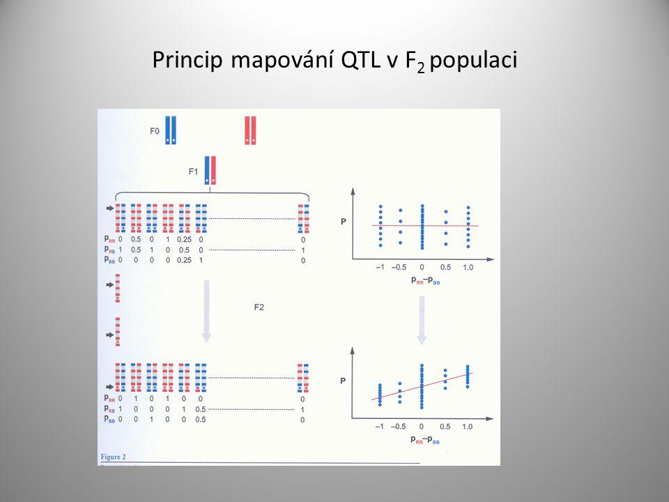 Princip mapování QTL v F 2 populaci
