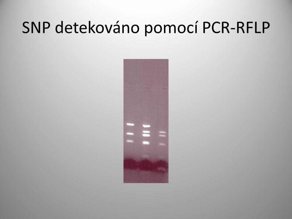 SNP detekováno pomocí PCR-RFLP