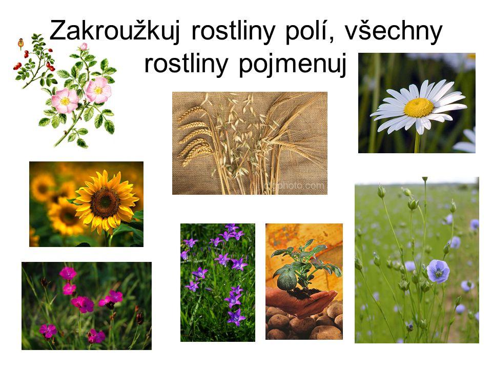 Zakroužkuj rostliny polí, všechny rostliny pojmenuj
