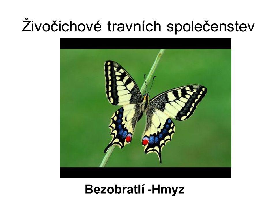 Živočichové travních společenstev Bezobratlí -Hmyz