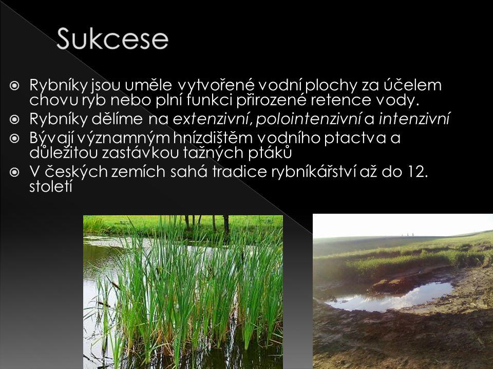  Rybníky jsou uměle vytvořené vodní plochy za účelem chovu ryb nebo plní funkci přirozené retence vody.