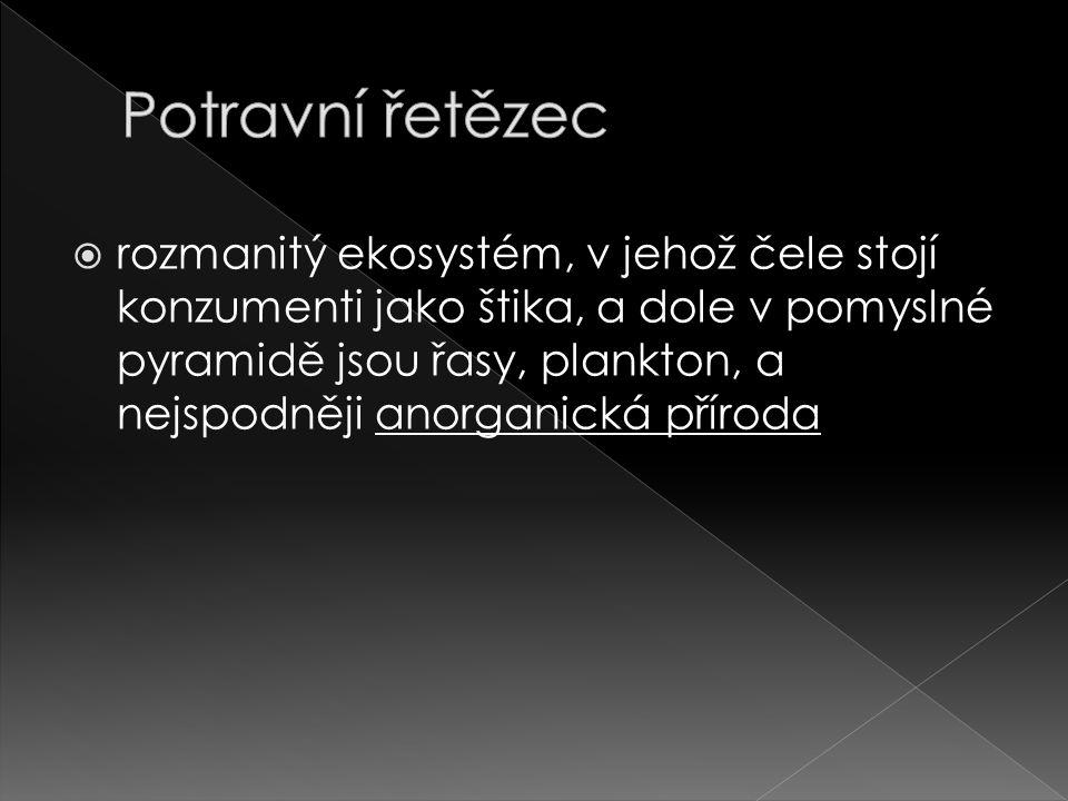  Orobinec - Jednoděložná rostlina - Čeleď orobincovité - Řád lipnicotvarý - Vytrvalé byliny - Květy- v klasech (palice) - Plody šíří pomocí větru