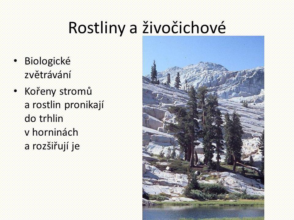Rostliny a živočichové Biologické zvětrávání Kořeny stromů a rostlin pronikají do trhlin v horninách a rozšiřují je