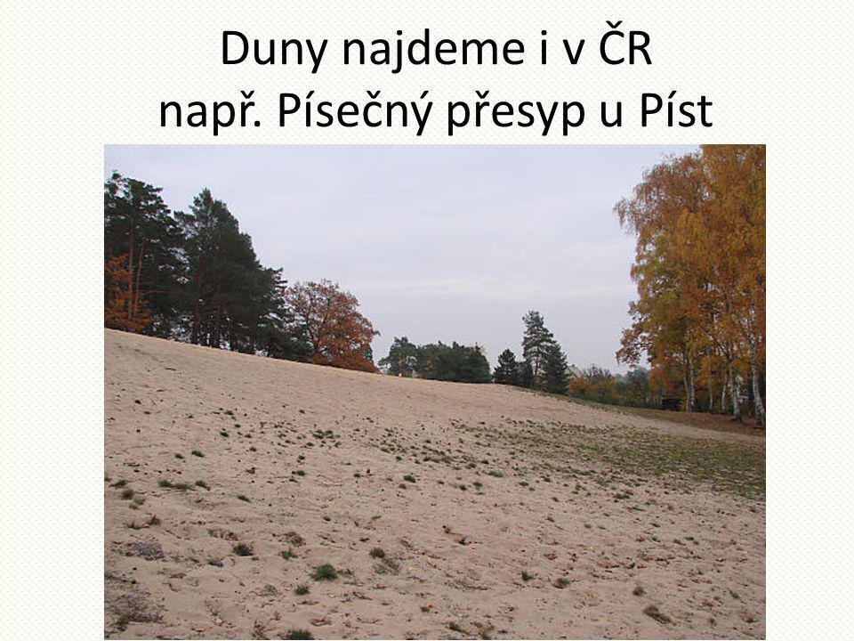 Duny najdeme i v ČR např. Písečný přesyp u Píst