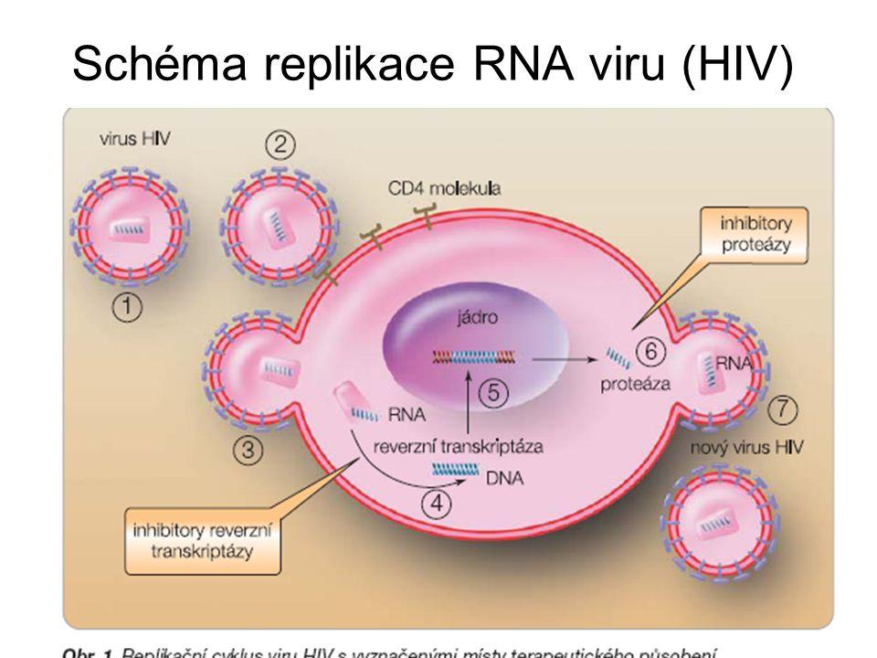 Schéma replikace RNA viru (HIV)