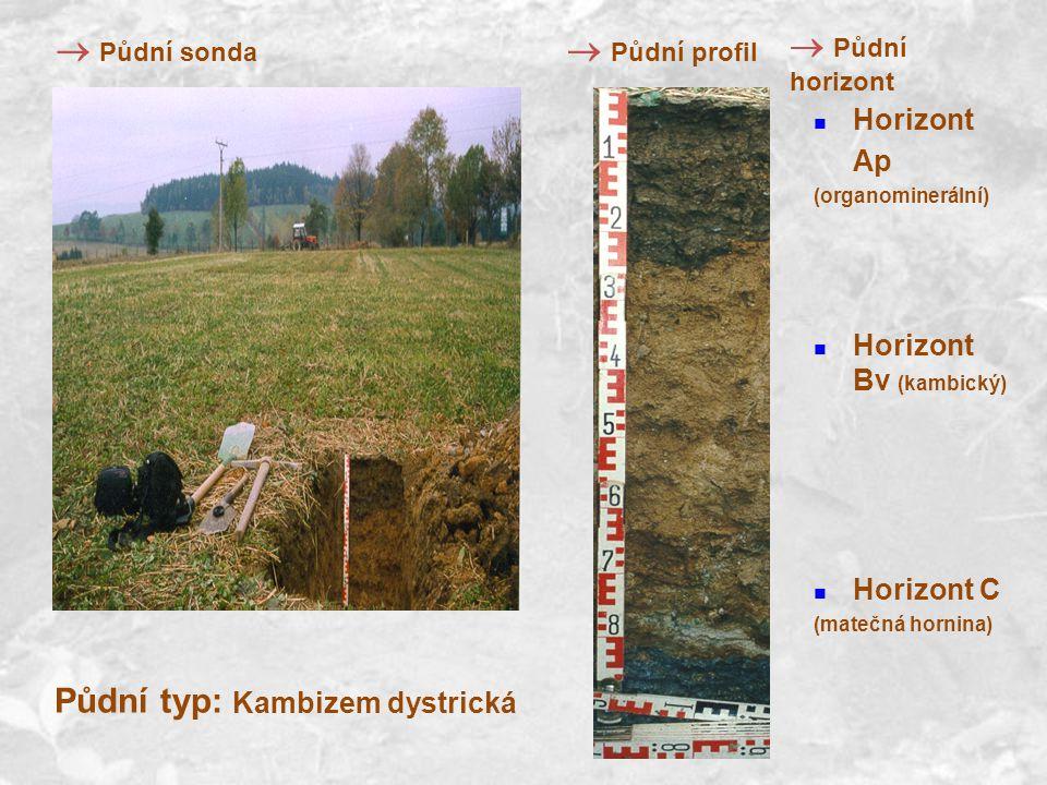 Horizont Ap (organominerální) Horizont Bv (kambický) Horizont C (matečná hornina) Půdní typ: Kambizem dystrická  Půdní profil  Půdní horizont  Půdní sonda