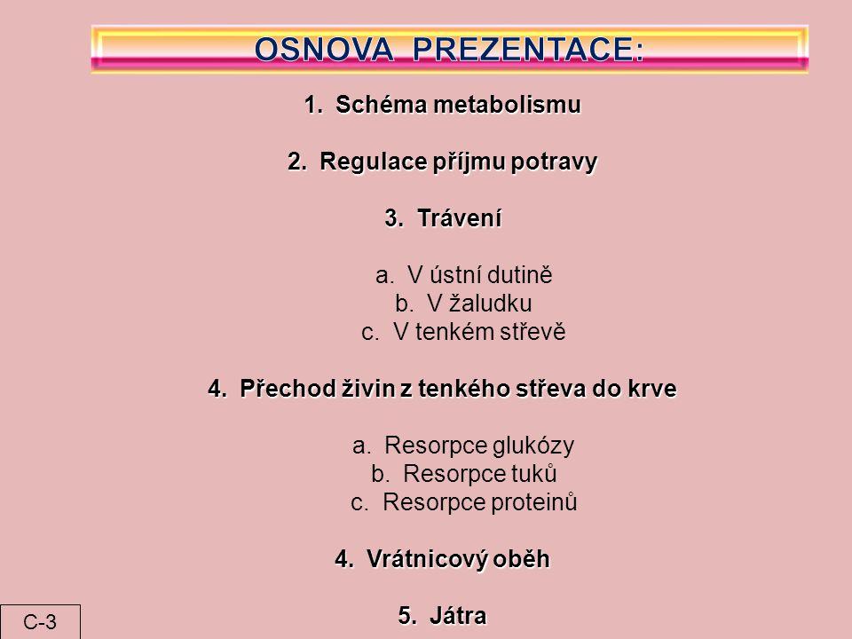 1.Schéma metabolismu 2.Regulace příjmu potravy 3.Trávení a.V ústní dutině b.V žaludku c.V tenkém střevě 4.Přechod živin z tenkého střeva do krve a.Res