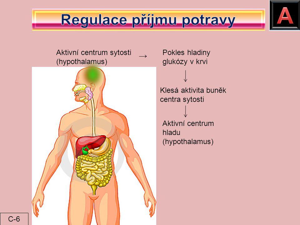 Aktivní centrum sytosti (hypothalamus) Pokles hladiny glukózy v krvi Klesá aktivita buněk centra sytosti Aktivní centrum hladu (hypothalamus) → C-6