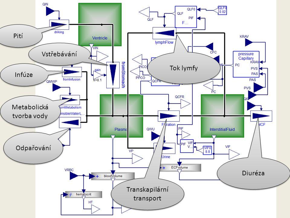 Pití Infúze Metabolická tvorba vody Odpařování Vstřebávání Transkapilární transport Tok lymfy Diuréza