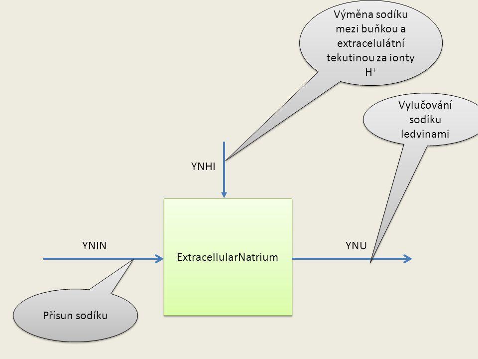 ExtracellularNatrium YNINYNU YNHI Přísun sodíku Vylučování sodíku ledvinami Výměna sodíku mezi buňkou a extracelulátní tekutinou za ionty H +