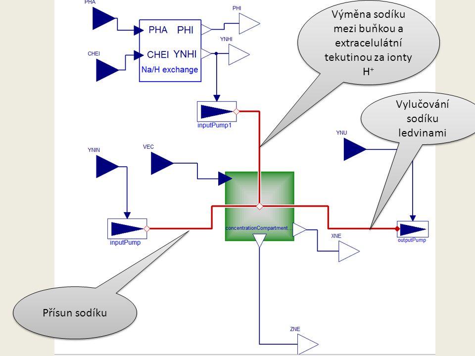 Přísun sodíku Vylučování sodíku ledvinami Výměna sodíku mezi buňkou a extracelulátní tekutinou za ionty H +